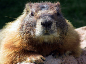 A Groundhogs Day Blessing or Curse? post image