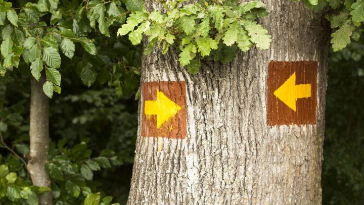 surprising reason nonprofit struggles to grow