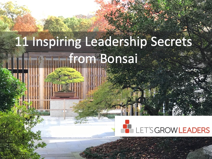 11 Inspiring Leadership Secrets from Bonsai